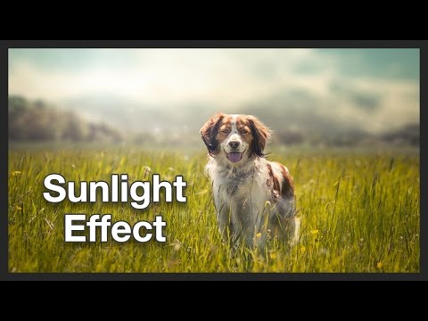 Dog Photo Manipulation | Sunlight effect | Photoshop Tutorial