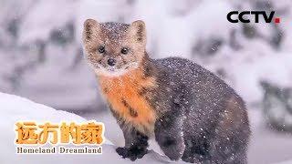 《远方的家》 20200424 大好河山 长白山——火山造就的动植物宝库| CCTV中文国际