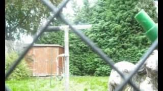 Aphex Twin - Strotha tynhe