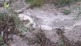 Descarga ilegal manchou de branco águas do rio Ave