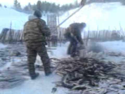 рыбалка на Севере Урала - YouTube