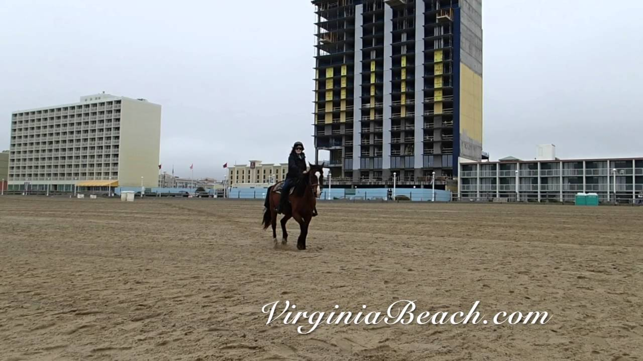 Horse Riding At Virginia Beach