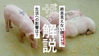 家畜伝染病「豚(とん)コレラ」の感染が5府県に拡大しています。昨年...