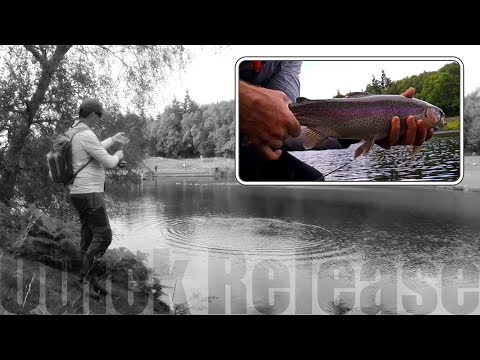 Fly Fishing UK | Ghyll Head | Hungry Summer Bows