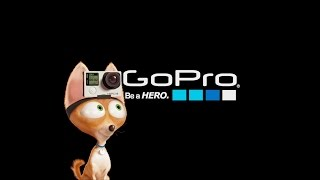 GoPro: The Secret Life of Pets