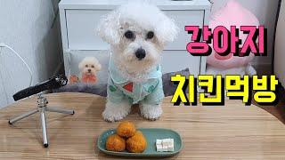 강아지 치킨먹방(짱구잠옷 입은 강아지)