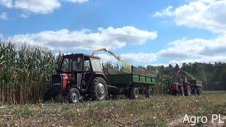 Kukurydza na kiszonkę 2016 /Cztery ciągniki 2 Sieczkarnie /Agro PL