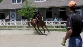 Equestrian - Not Afraid