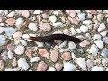 臺灣昆蟲~無殼蝸牛是誰?陸生蛞蝓