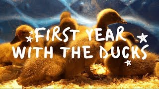What I Wish I'd Known Before Getting Ducks | KHAKI CAMPBELL