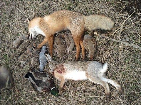 Моя первая охота на зайца, Охотник