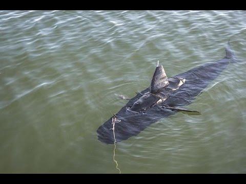 U.S. Navy testing underwater fish robot called GhostSwimmer