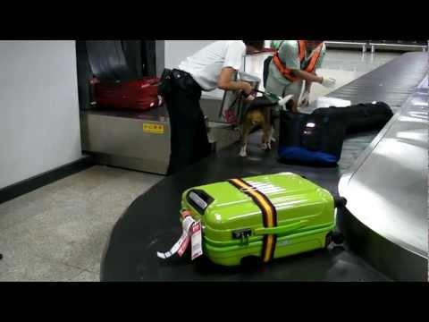 20110509 Taipei airport sniffer dog found something