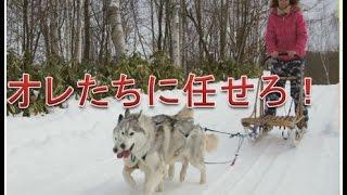 犬は基本的に飼い主に絶対服従ですがそんな中でも独立心が旺盛な犬種も...