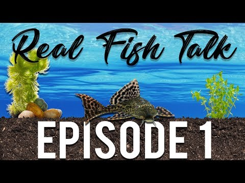 REAL FISH TALK : TOPIC TBA