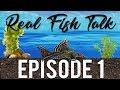 REAL FISH TALK : Dirted Aquariums. Good Or Bad? #1