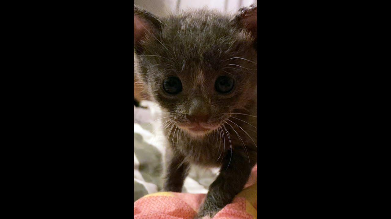 인형같았던 아기고양이는 지금..