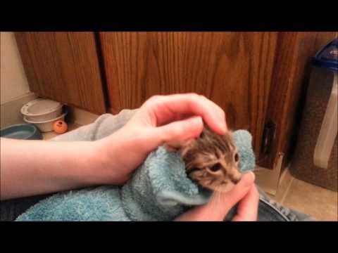 Foster Kitten's First Bath!