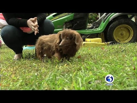 Pet Central - Watch! Dog missing for 5 years reunited with Connecticut family!