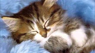 Little cat sleeping