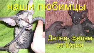 Кошки 2019 Домашние животные Любимые наши Cats