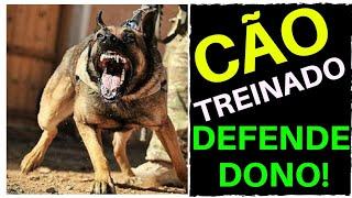 CÃO TREINADO DEFENDE DONO DE AMEAÇA! | Cães de Guarda | Pastor Belga Malinois | Rottweiler