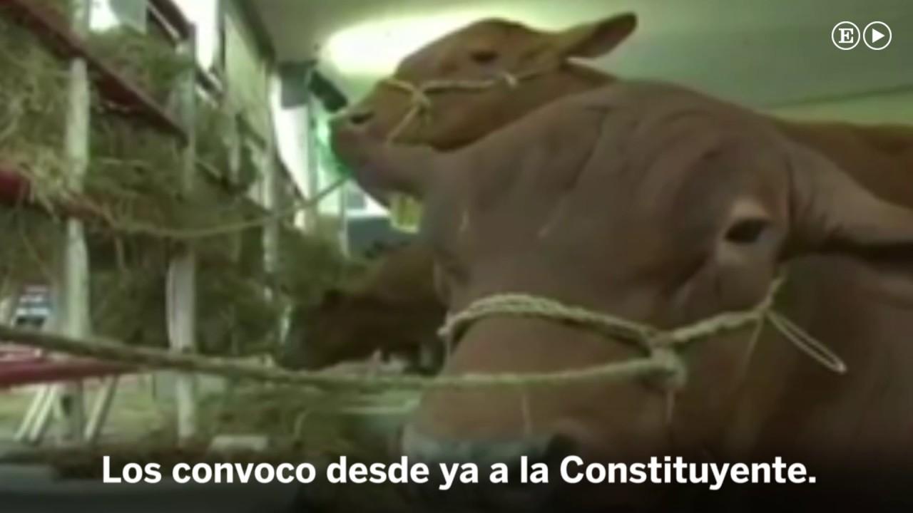 Cagadas Y Peos Videos Porno un vídeo que muestra a maduro hablando a unas vacas levanta polémica