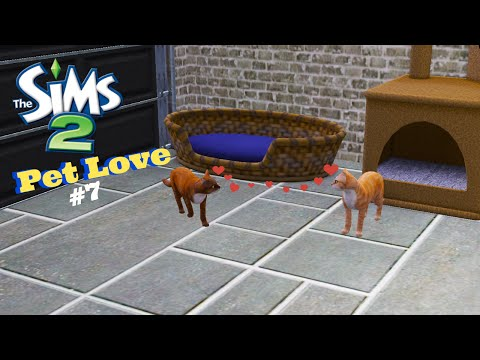 The Sims 2| Leyva of Love|Part 7 Pet Love