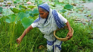 Collect MALANCHA Shag From Lotus Pond and Cooking by Grandmother in Village Style
