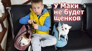 VLOG: У ветеринара / Сложное решение / У Маки не будет больше щенков