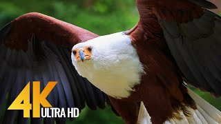 African Birds 4K 10 bit color  - African Wildlife Video with Amazing Birds Sounds - 3 HRS