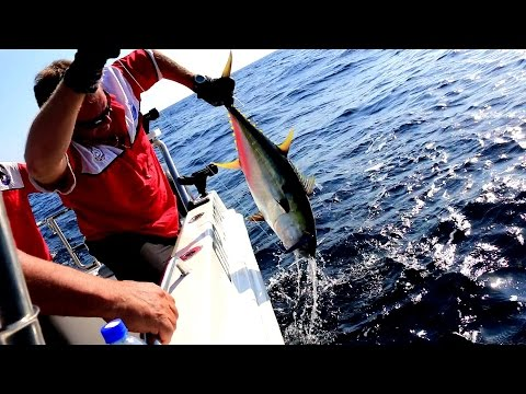 Wave Dancer Deep Sea Fishing St. Lucia South Africa - Wave Dancer Fishing Charters