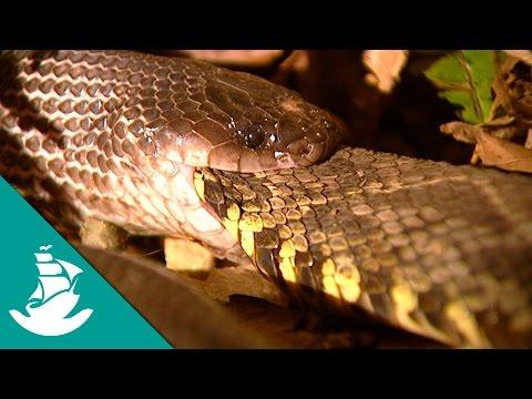 Toxic and Hallucinogenic Animals (full documentary)