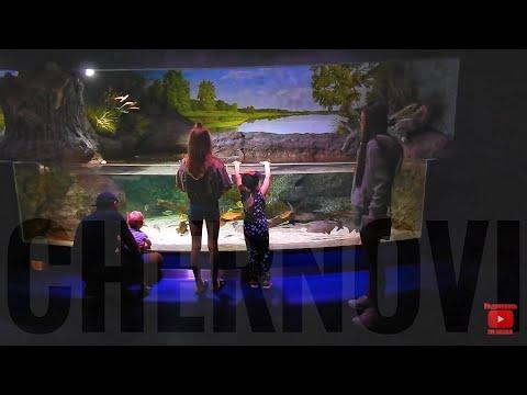 ПУТЕШЕСТВИЕ ПО ЛИТВЕ | серия 381 Черновы ТВ