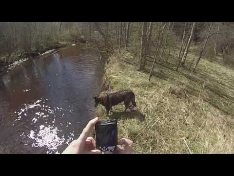2016-04-30 hiking on the bank of Elva river (Estonia) part 2