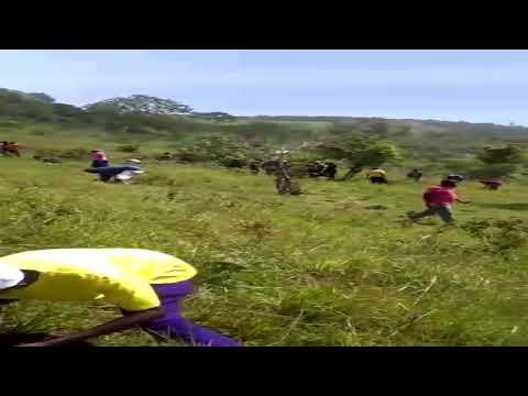 Environmental Campaign - One Million Trees For Haiti