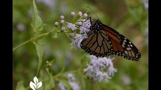 Butterfly Garden Design |john Dromgoole |central Texas Gardener