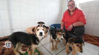 Gerettete Welpen kommen zum Tierschutzstation Marienberg