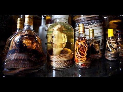 کیهان لندن- شراب مار، سوغاتی نامناسب از حیات وحش