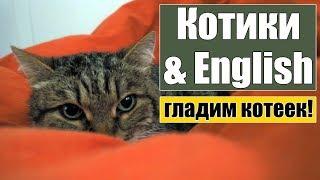 Английский с котиками))) Полезные слова и фразы - говорим о питомцах!