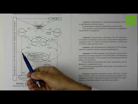 Гормоны щитовидной железы, щитовидная железа гормоны щитовидной железы