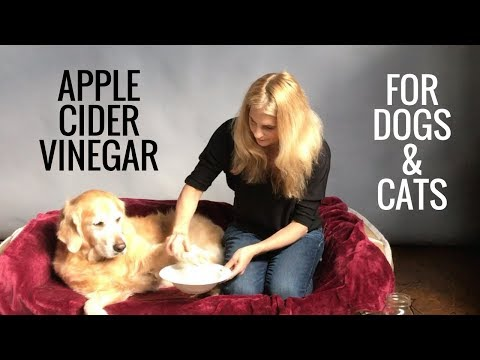 Apple Cider Vinegar for Dogs and Cats –  Fleas, Allergies, Bladder Infections – Earth Clinic