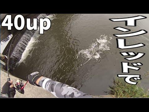 バス釣り インレッドで40up!! Bass fishing in Japan - YouTube | 480 x 360 jpeg 33kB