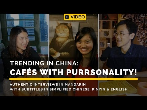 Trending in China: Cafes with Purrsonality I Chinese Listening Practice I Easy Mandarin