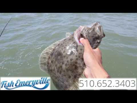 Fish Emeryville