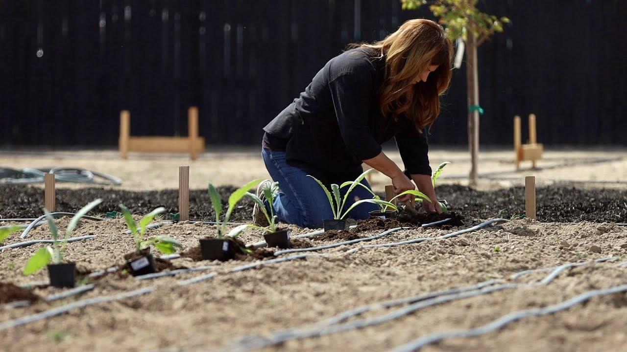 Download How I Grow Artichokes! 🌿💚 // Garden Answer