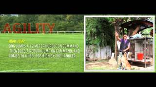 Boks K9 Dog Training - Dog School Philippines Hd