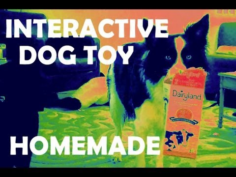 homemade-treat-dispenser---interactive-dog-toy-for-big-and-little-dogs