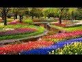 Top 10 Most Beautiful Garden Flowers, The Most Prettiest Flowers Wallpapers In Gardens, Nice Flowers