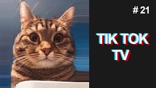 ВИДЕО ПРИКОЛЫ СМЕШНЫЕ ЖИВОТНЫЕ ПРИКОЛЫ ТИК ТОК СМЕШНЫЕ КОТЫ ТИК ТОК КОТЫ TIK TOK TV 21